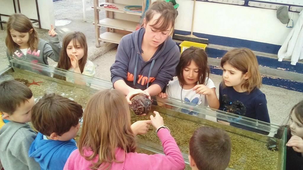 classe de mer aquarium-2-c