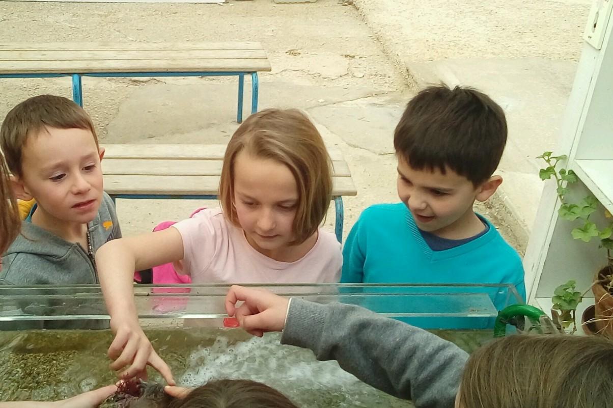 classe de mer aquarium-3