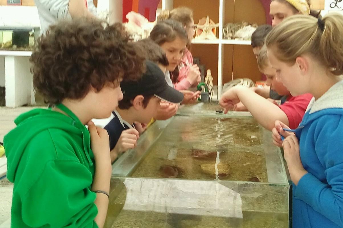 classe de mer aquarium-4