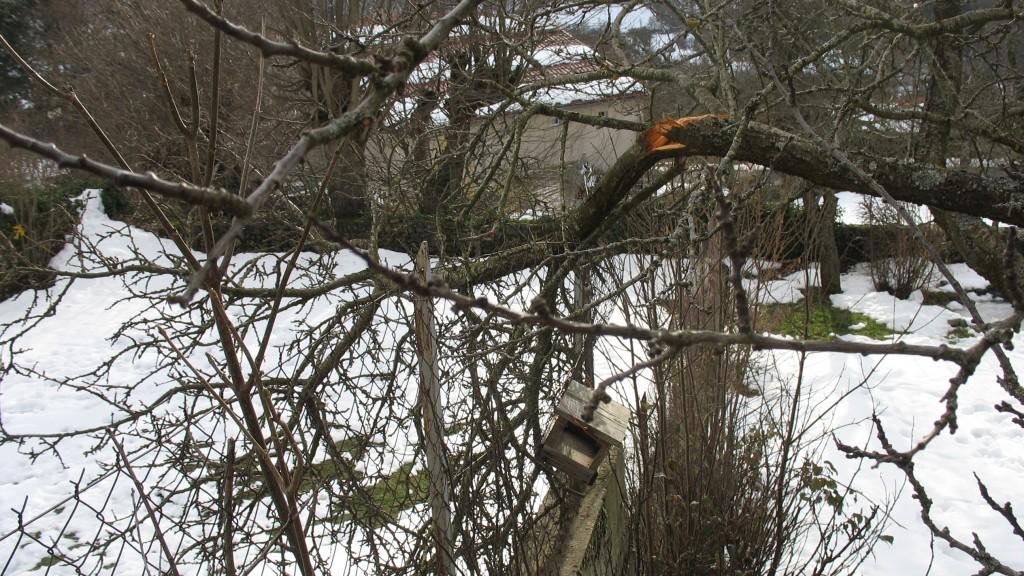 branches cassées
